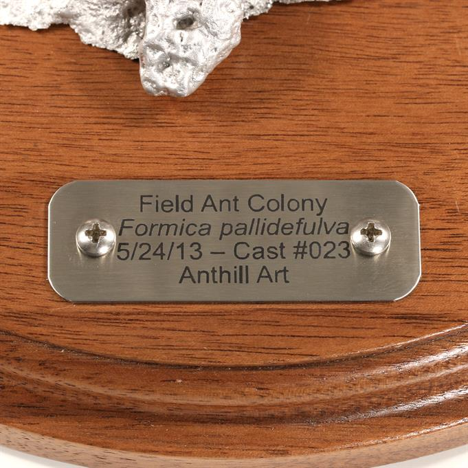 Aluminum Field Ant Colony Cast #023 - Plaque Picture.