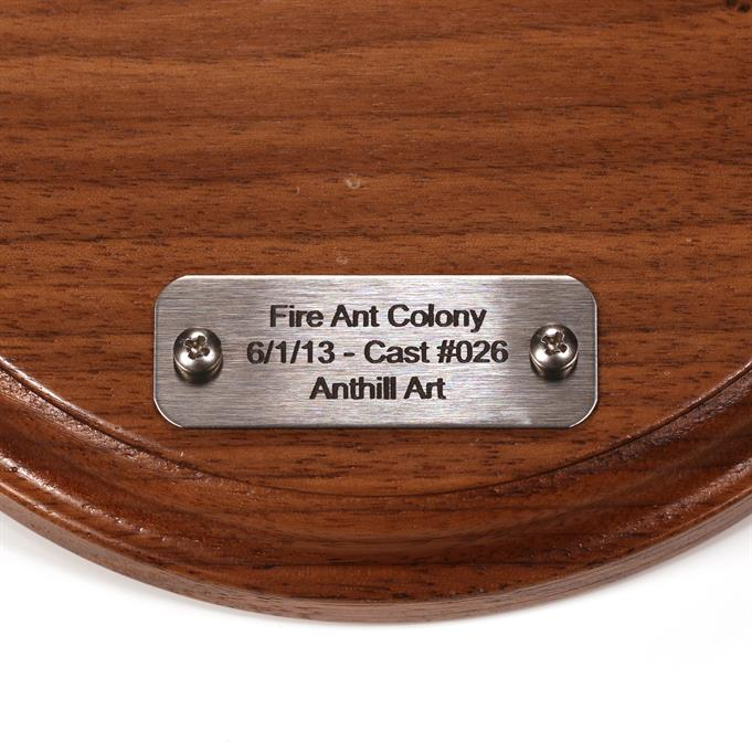 Aluminum Fire Ant Colony Cast #026 - Plaque Picture.