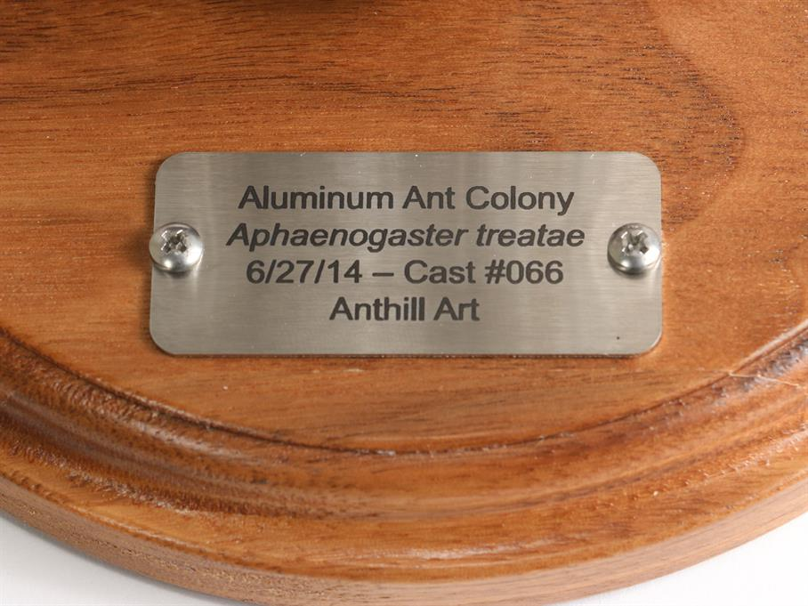 Aluminum Aphaenogaster treatae Ant Colony Cast #066 - Plaque Picture.