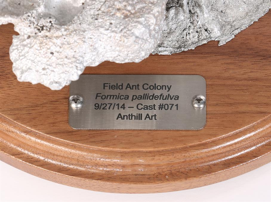 Aluminum Field Ant Colony Cast #071 - Plaque Picture.