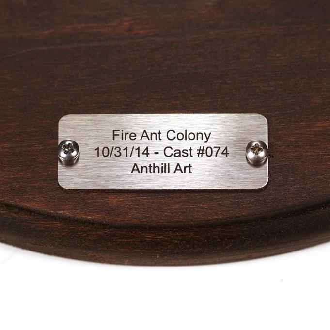 Aluminum Fire Ant Colony Cast #074 - Plaque Picture.