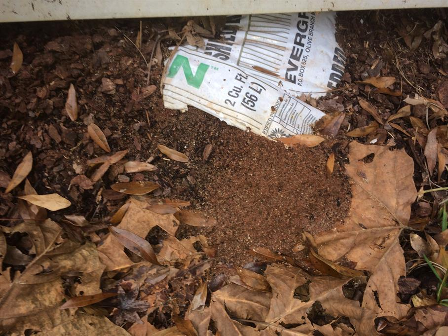 Casual Survey of Three Acres of Land Reveals 120 Fire Ant Colonies - In a potting soil bag.