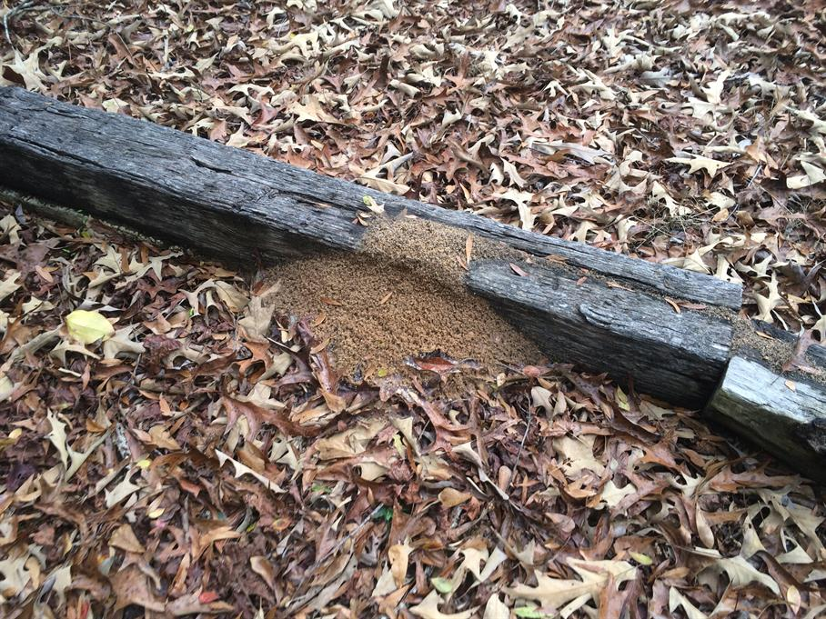 Casual Survey of Three Acres of Land Reveals 120 Fire Ant Colonies - Another railroad tie.